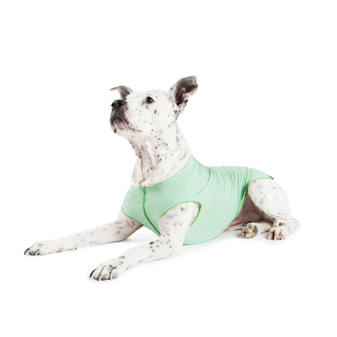 Gold Paw Sun Shield Dog Tee - Pistachio Heather