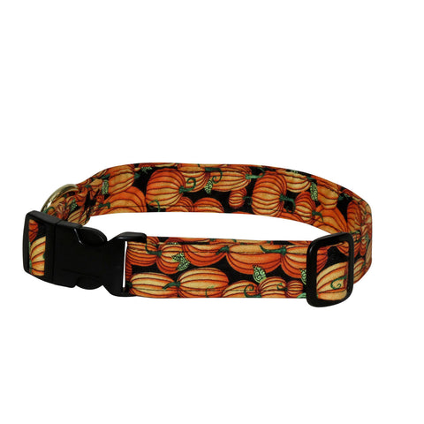 Elmo's Closet Pumpkins Dog Collar