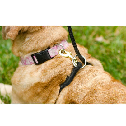 Weiss Walkie Dog Training Leash