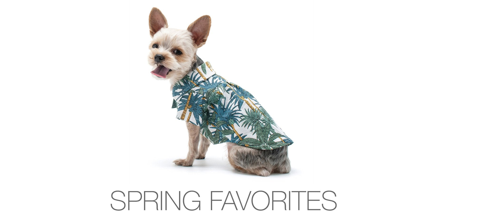 Spring Dog Apparel & Collars