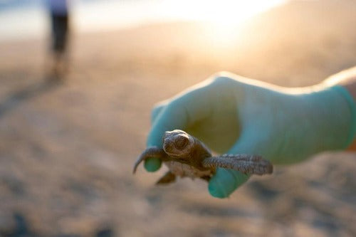 Support Our Beach Clean-Ups & Animal Conservation!