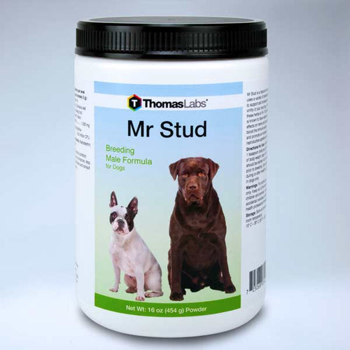 Mr Stud - 16 oz