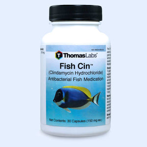 fish cin clindamycin 150 mg capsules fish antibiotics direct