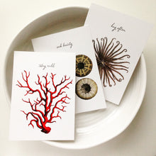 Sea Life Postcards - Stay Wild