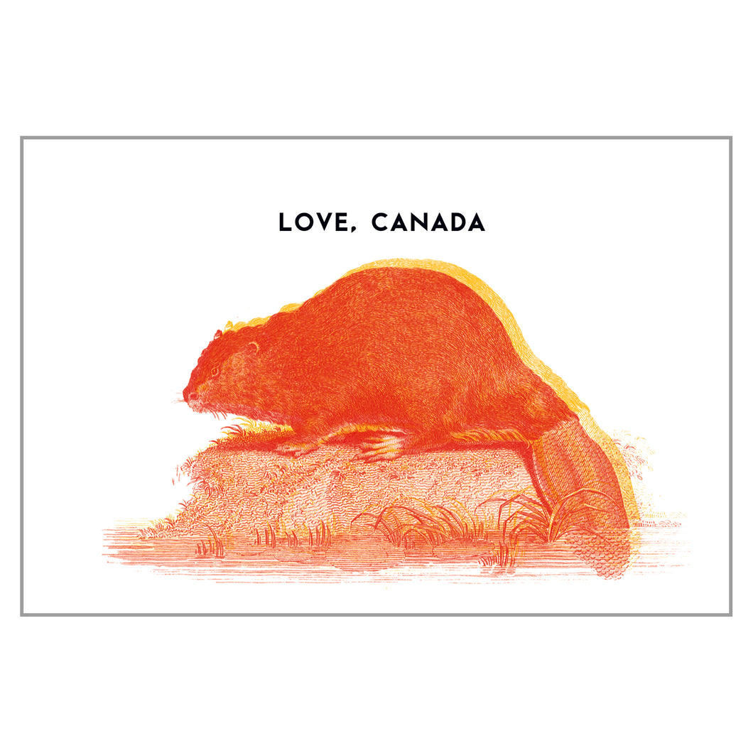 Canadiana - Beaver Postcard