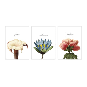 Botanical Postcards - The Set of 3