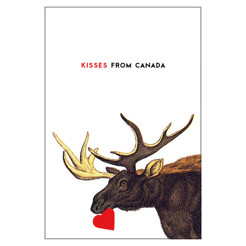 Canadiana - Moose Postcard