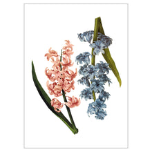 Hyacinths Postcard - Online Only