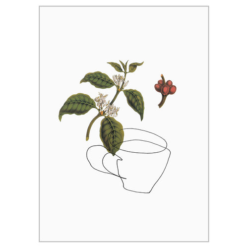 Contour Collage Postcards - Coffee