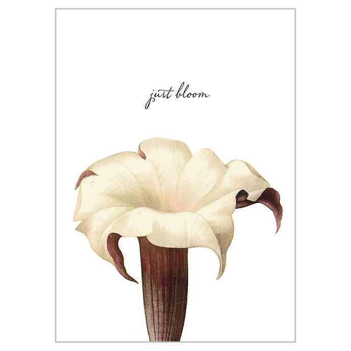 Botanical Postcards - Just Bloom