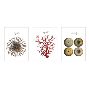 Sea Life Postcards - The Set of 3
