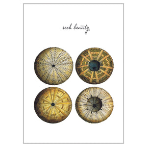 Sea Life Postcards - Seek Beauty