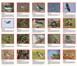 scanned image of Birds in the New Forest Walks Map | The Little Map Company