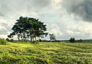 photo of New Forest views