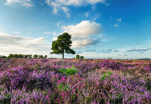 photo of the New Forest views