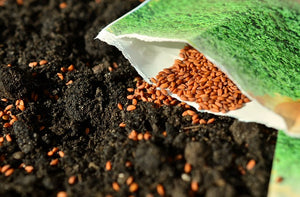 Survival Seeds Complement Food Supply