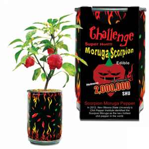 Moruga Scorpion Pepper Growing Kit | Trinidad Moruga Scorpion