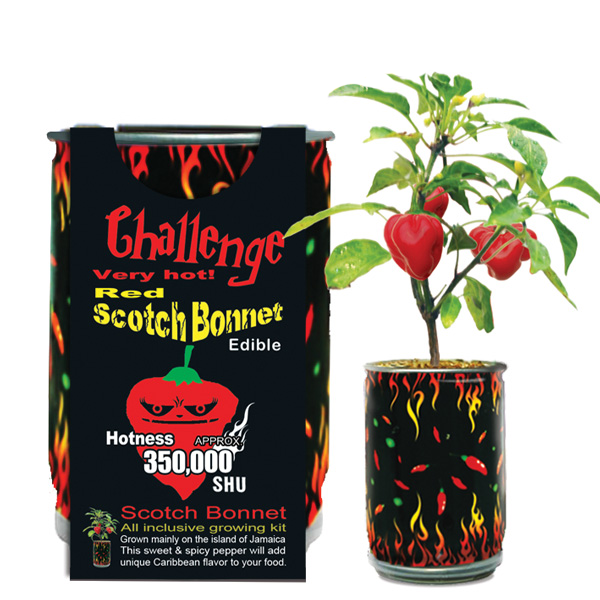 Scotch Bonnet Growing Kit Canada
