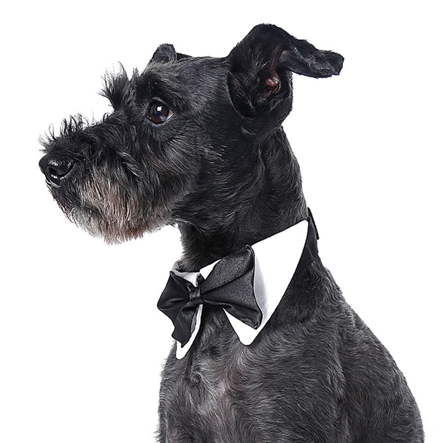 Qbleev satin bowtie dog collar adjustable on neck of black dog