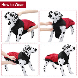 Color Matching Waterproof Dog Jacket