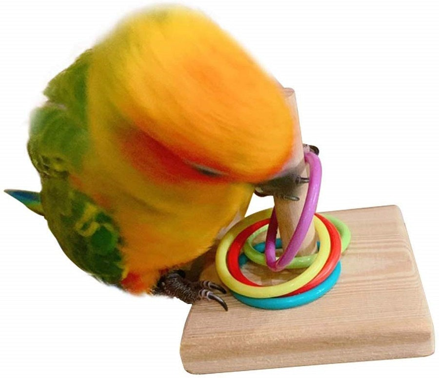 Bird Intelligence Training Color Rings Toys for Parakeet Conure Finch