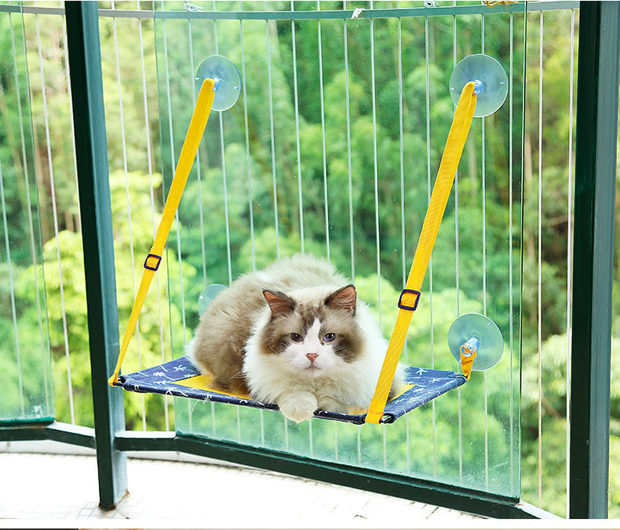 CAT_WINDOW_PERCH_QBLEEV_1