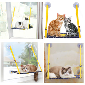 CAT_WINDOW_PERCH_QBLEEV_6