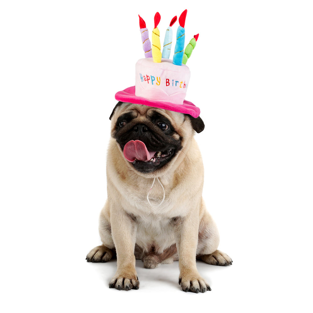 Dog Cat Birthday HatBirthday Party Hat With Cake And 5 Colorful Candles Design Pet