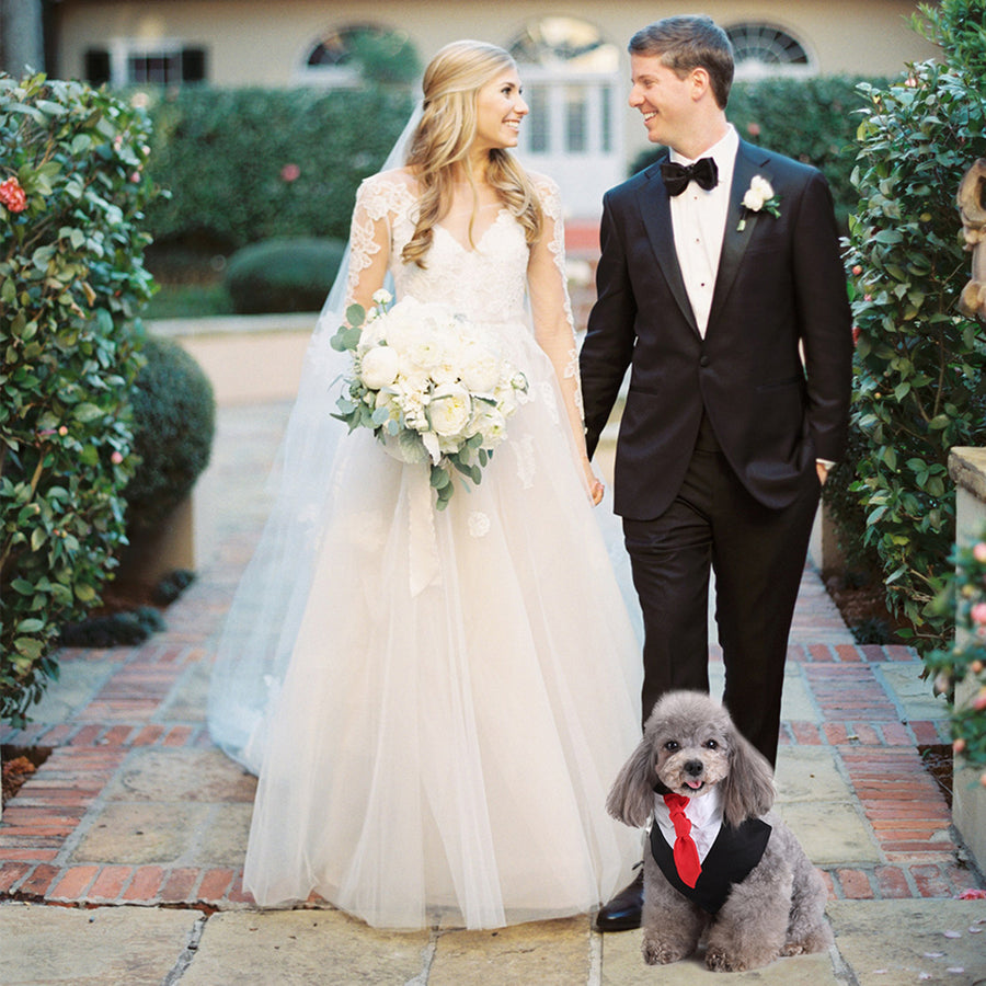 a dog wearing tuxedo for wedding
