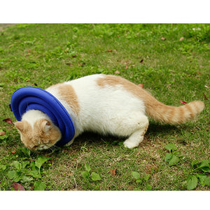 Qbleev lightweight foam dog recovery collar anti-bite and anti-lick blue on cat neck