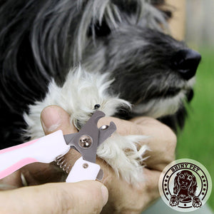 Grooming Tools for dog