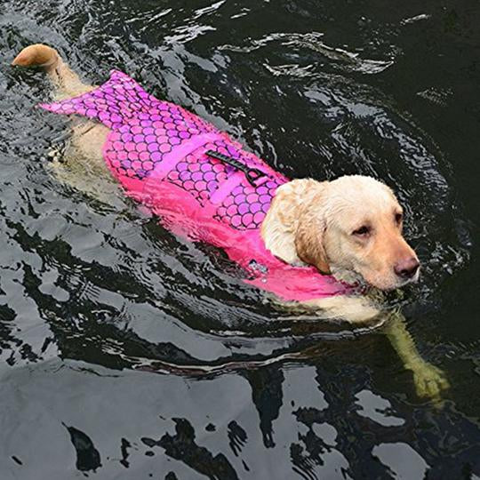 a dog wearing dog life jacket mermaid pink in the water - Qbleev