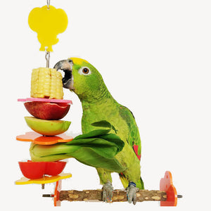 Bird Foraging Toys