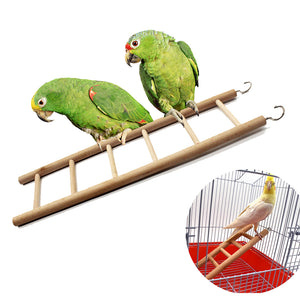 Two parrots stand on a Toy ladder