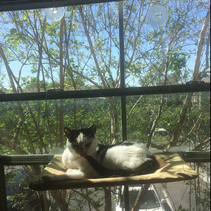Cat Hammock Window Perch Washable