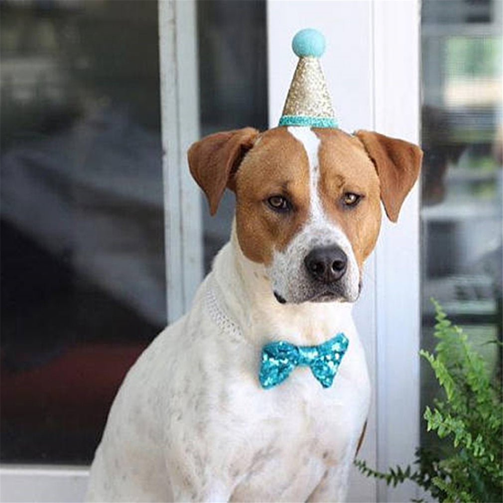 Load Image Into Gallery Viewer Dog Birthday Party Cone Hat Puppy Shiny Band