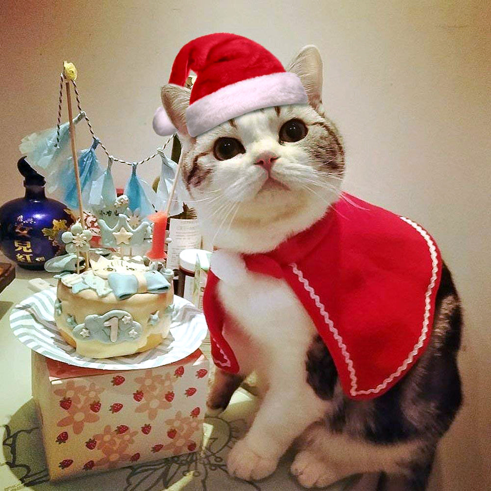 Cat Santa Hat and Clothes Christmas Red | Cat Halloween – QBLEEV