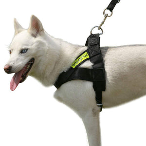Left side of Qbleev Easy Walk Dog Harness Adjustable & Reflective worn by  a dog