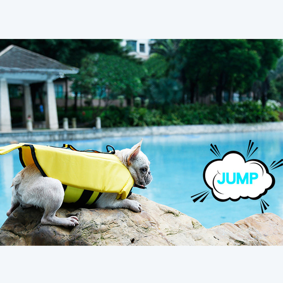 dog dressed dog life jacket of duck design with chin pad up preparing for jumping to water