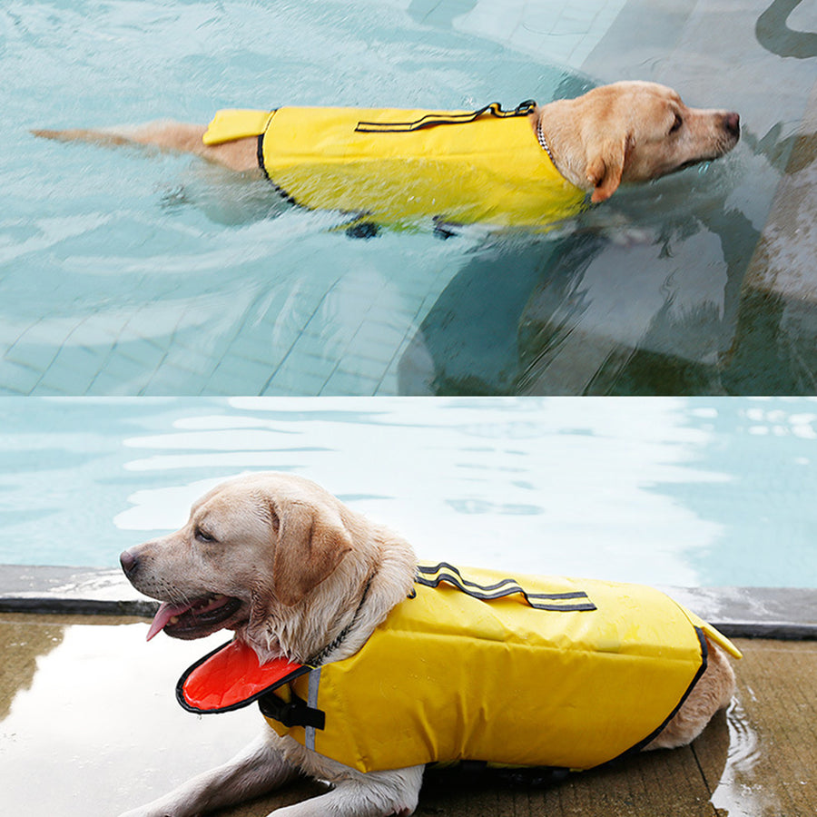 dog dressed dog life jacket of duck design with chin pad up swimming in the water