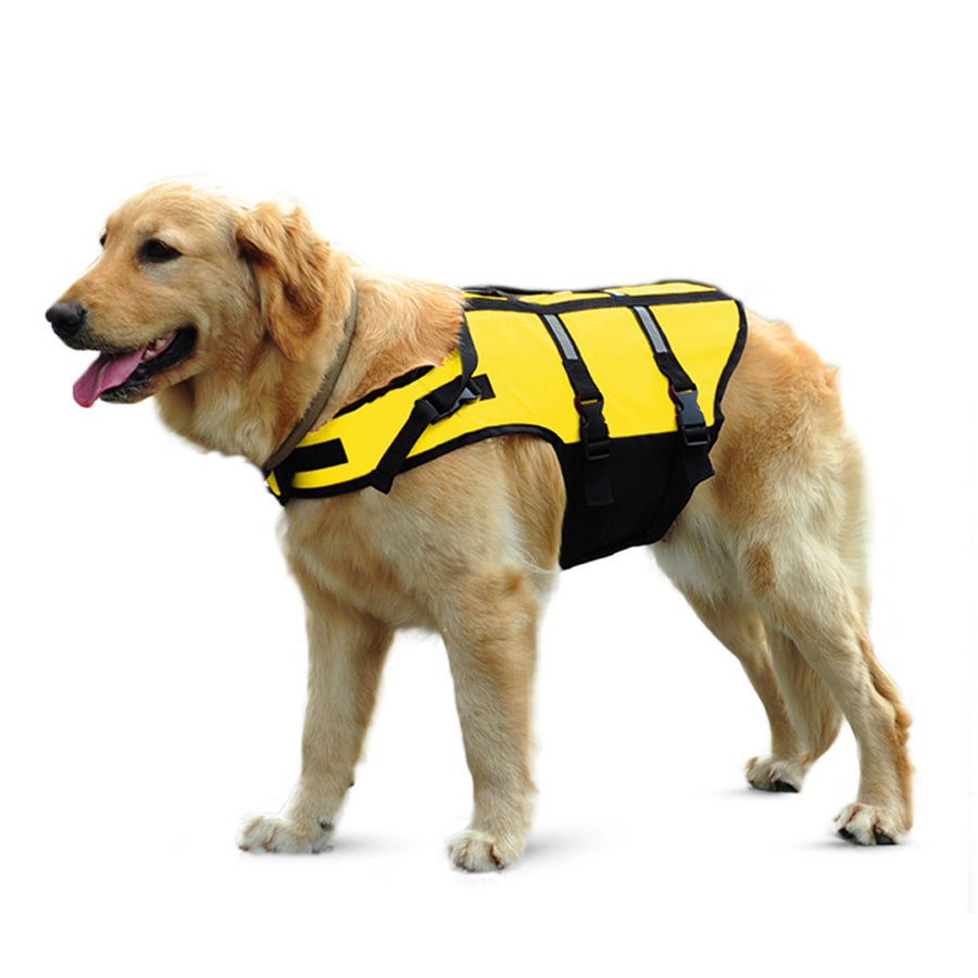 a dog wearing fluorescent yellow dog life jacket