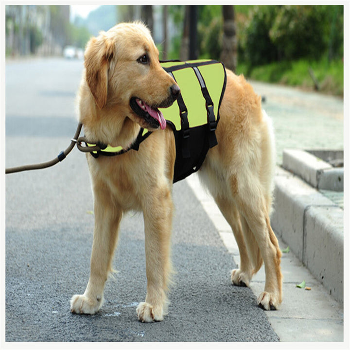 a dog wearing fluorescent green dog life jacket