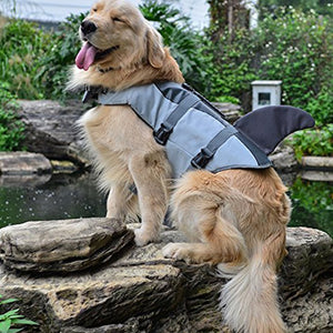 a dog wearing Qbleev dog life jacket shark grey