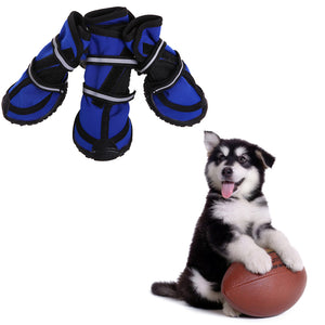 a set of four waterproof dog boots blue being stared by a dog