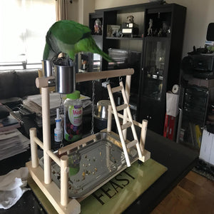 A PARROT STANDS ON A BIRD STAND