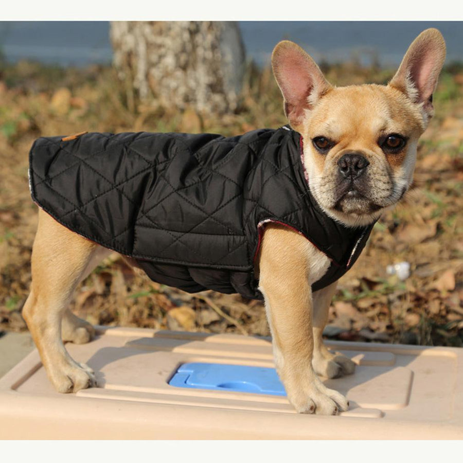 Windproof Reversible Dog Apparel