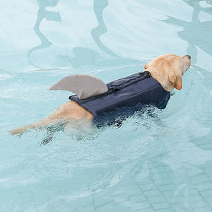 a dog wearing life jacket shark grey with reflective stripes & adjustable belt in the water
