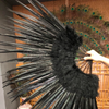 "Black Marabou & Pheasant Feather Fan 29""x 53"" with Travel leather Bag - hotfans"