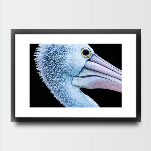 The Pelican - Prints - Roumies Affordable Art - www.Roumies.com
