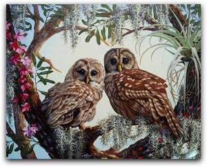A Owl Couple Paint By The Numbers Kit